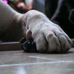Tagliare le unghie è più facile con il TTouch®  by Debby Potts
