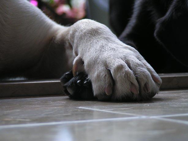 Il TTouch® può essere un grande aiuto nel rendere il taglio delle unghie più facile e più sicuro sia per i gatti che per i cani.