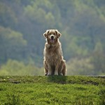 Il rispetto per il cane: complessità che parte da lontano