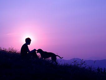 I cani percepiscono il nostro umore e stamparsi sulla faccia un sorriso tirato quando tutto il resto del nostro corpo comunica altro, non serve a molto! Iniziate una sessione di lavoro solo se siete rilassati o quantomeno contenti di passare del tempo con il vostro cane.