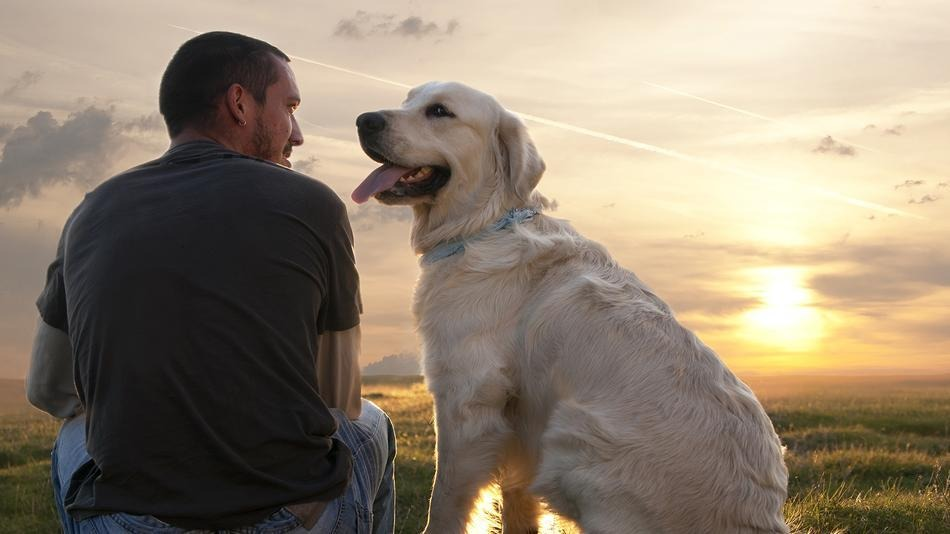 Matrimonio Uomo Cane : Dogmagazine amicizia uomo cane