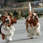 La sensazione di euforia dopo una corsa? La provano anche i cani!