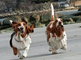 """La sensazione piacevole di euforia dopo una corsa si chiama """"runner's high"""" e anche i nostri cani la provano!"""