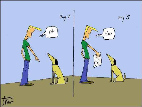 Gli errori più grandi che possiamo fare sono proprio questi: sostituirci al cane non permettendogli di provare a superare una situazione e non avere nemmeno una briciola di fiducia in lui.