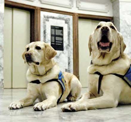 Jeeter e Ellie al lavoro in tribunale.