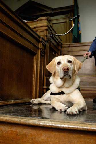 Dieci anni fa a Seattle, Jeeter è diventato il primo cane addestrato a livello professionale per aiutare i bambini a testimoniare, secondo quanto detto dagli esperti. Da allora i cani sono stati utilizzati con centinaia di vittime e testimoni.