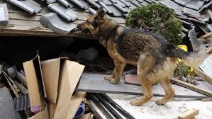 È noto che alcuni animali hanno la capacità di sentire con largo anticipo l'arrivo di scosse sismiche.
