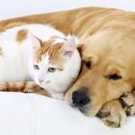 Animali e gatti in condominio, la LAV festeggia!