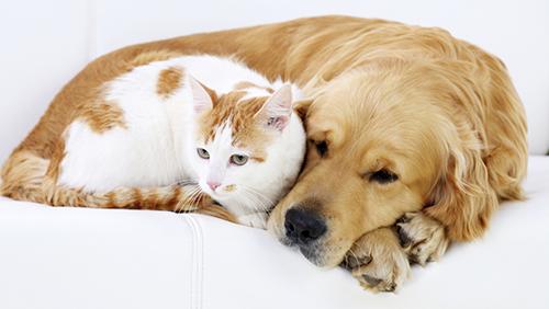 Cani, gatti & Co. nei condomini...ecco la legge che li tutela!