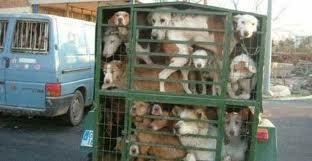 """E questi cani sono costretti a """"pagare"""" la nostra vacanza."""
