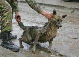 I cani vengono catturati, stipati in furgoni e fatti sparire.