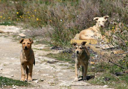 I cani si sono gettati senza pietà sul pedofilo che, per difendersi, ha lasciato andare la bambina.