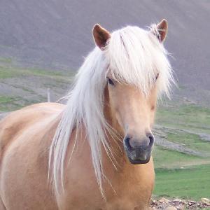 Il cambiamento di gran lunga più significativo è si è verificato inserendo nel lavoro Gabriel, il mio cavallo islandese. Usare il cavallo era un modo per cambiare il contesto dell'esercizio.