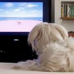 "Nasce la prima Tv da ""cani"""