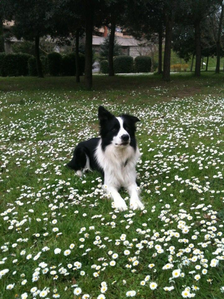 Da allora il mio cane fa una vita normale, un po' di agility, poca e sempre tenuto sotto strettissima sorveglianza da parte mia, giochiamo a palla e pure con la palla sto attentissima.