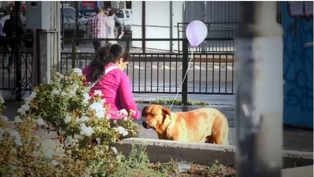 Un cane con il suo palloncino si avvicina ad una donna. L'iniziativa ha riscosso grandi consensi.
