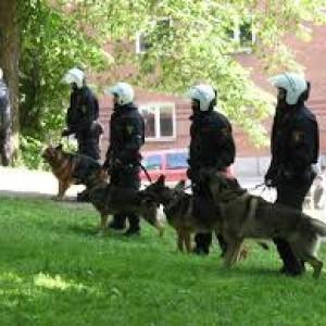 il commissario della polizia di Notthingham ha istituito un fondo pensione di 500 sterline annue per ogni cane poliziotto che ha svolto i propri compiti in seno alla polizia locale.