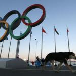 2000 (duemila) cani abbattuti a Sochi per le Olimpiadi.