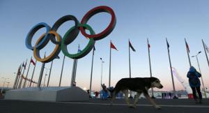 Sochi Olympics Dogs
