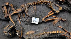 Ritrovato un importante sito archeologico contenente un vero e proprio cimitero per cani risalenti all'epoca Azteca