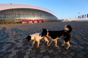 I cani di Sochi