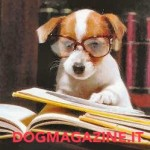 Instadogmagazine :-)