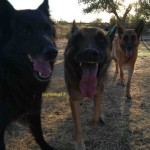 Come parla un cane – Vocalizzazioni