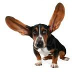 Le differenze sensoriali tra uomo e cane. Come vede il mondo il nostro cane?