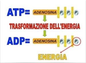 ATP-ADP