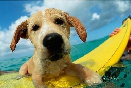Un'estate sicura con il vostro cane
