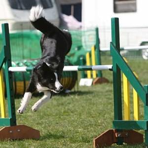 bc-jumping