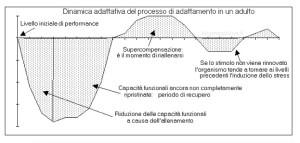 dinamica-adattativa-adattamento